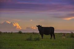 Paysage de Pampas, Argentine Photos stock