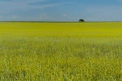 Paysage de Pampas, La Pampa, Images libres de droits