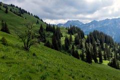 Paysage de panorama en Bavière avec des montagnes d'alpes et pré au ressort photo libre de droits