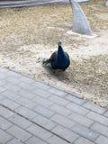 Paysage de parc de la Chine P?kin Nanhaizi beau photo libre de droits