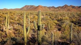 Paysage de parc national de Saguaro Photographie stock