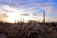 Paysage de parc national de Saguaro Photo stock