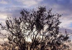 Paysage de parc national de Saguaro Image stock
