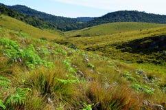 Paysage de parc national Horton Plains image stock