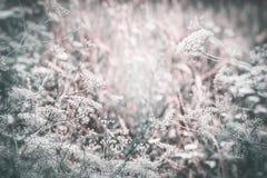 Paysage de pays de fin d'été avec les herbes et les fleurs sauvages, fond extérieur de nature images stock