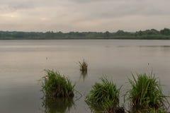 Paysage de pays de matin au lac avec une canne croissante Photographie stock