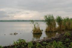Paysage de pays de matin au lac avec une canne croissante Photos libres de droits