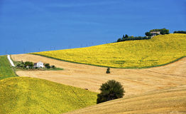 Paysage de pays en Marches (Italie) Photo stock