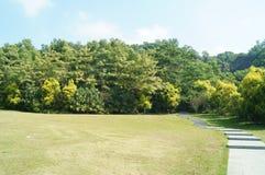 Paysage de pelouse Photographie stock