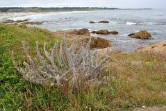 Paysage de plage de baie de Monterey Photos libres de droits
