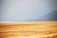 Paysage de plaine de la Tanzanie Photo stock