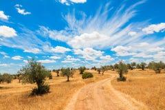 Paysage de plantation d'oliviers Images libres de droits