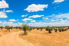 Paysage de plantation d'oliviers Photos stock
