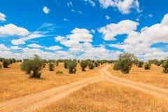 Paysage de plantation d'oliviers Image stock