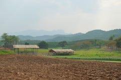 Paysage de plantation de thé, Chiang Rai, Thaïlande Photographie stock libre de droits