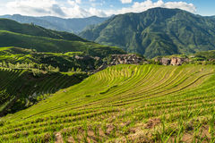 Paysage de porcelaine de Guilin de terrasses de riz de Longsheng Photo stock