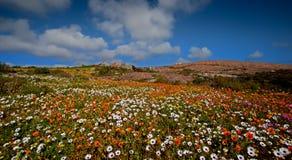 paysage de pré avec des fleurs photographie stock