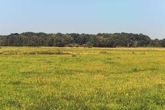 Paysage de pré d'été de campagne avec des arbres à l'horizon Le N photos stock