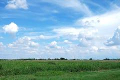 Paysage de pré de champ d'herbe verte Photos libres de droits