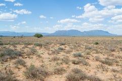 Paysage de prairie avec des montagnes, le Cap-Occidental, Afrique du Sud Photographie stock libre de droits
