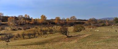 Paysage de prairie de la Chine Bashang Images stock