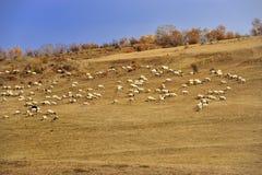 Paysage de prairie de la Chine Bashang Photographie stock