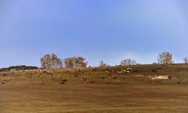 Paysage de prairie de la Chine Bashang Photo libre de droits