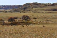 Paysage de prairie de la Chine Bashang Photo stock