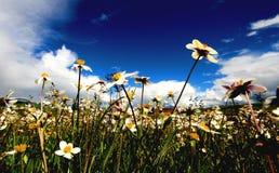 Paysage de prairie de tour d'ancêtre Photos libres de droits