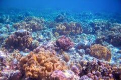 Paysage de récif coralien sur le fond marin Chauffez la vue bleue de mer avec de l'eau propre et la lumière du soleil Image stock