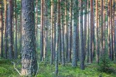Paysage de région boisée Image libre de droits