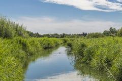 Paysage de réserve naturelle centrale de marécages de Londres Photo libre de droits