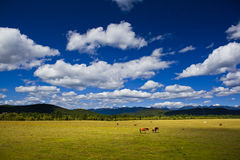 Paysage de ranch de Shangri-La Photo stock