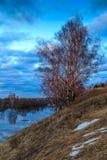 Paysage de ressort, arbre de bouleau sur une banque raide de la rivière Image libre de droits