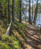 Paysage de ressort au bois Photographie stock