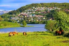 Paysage de ressort avec des chevaux mangeant l'herbe dans un pré vert par un lac à la lumière du soleil photos libres de droits