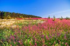 Paysage de ressort avec des fleurs sur un pré Photos libres de droits
