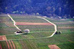Paysage de ressort avec des vignes et des arbres et forêt de floraison Photos libres de droits