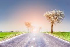 Paysage de ressort avec la route et les fleurs de cerisier sauvages Photo stock