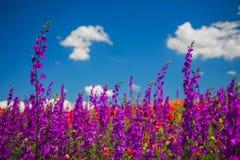 Paysage de ressort avec rouge, le rose et les wildflowers pourpres sur un pr? photos libres de droits