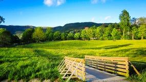 Paysage de ressort avec un pont en bois, un pré des renoncules jaunes et les arbres verts au soleil photos libres de droits