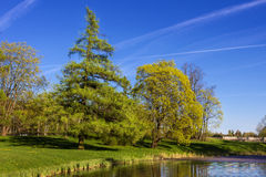 Paysage de ressort avec un sapin et un lac Image stock