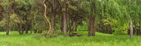 Paysage de ressort d'été - vue du lieu de repos dans la forêt un jour estival ensoleillé photos libres de droits
