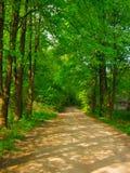 Paysage de ressort dans les montagnes, forêt verte images libres de droits