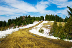 Paysage de ressort de forêt Images libres de droits