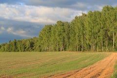 Paysage de ressort, forêt de bouleau au bord du champ Image stock