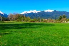 Paysage de ressort, herbe verte et montagnes de neige Image libre de droits