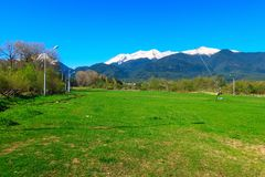 Paysage de ressort, herbe verte et montagnes de neige Photos stock
