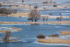 Paysage de ressort - inondez en River Valley du Siverskyi Seversky Donets, prés, arbres, oiseaux photo libre de droits