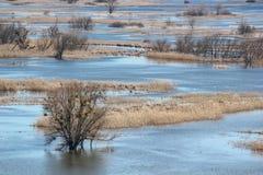 Paysage de ressort - inondez en River Valley du Siverskyi Seversky Donets, prés, arbres, oiseaux images stock